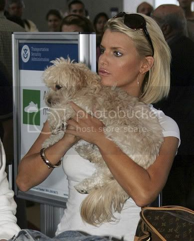 Jessica Simpson si maltezul Daisy